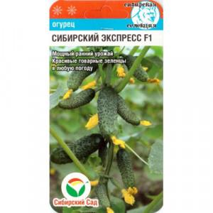 Огурец Сибирский экспресс F1 Сибирский сад
