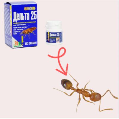 Рыжие домашние муравьи в квартире - как избавиться от них