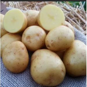 Картофель Гала/Родриго