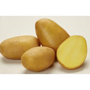 Картофель Кроне