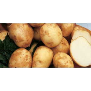 Картофель Голубка Элита
